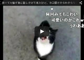 怒った猫が急に話しかけてきた.png