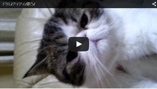 歌う猫「ドラミちゃん」.png